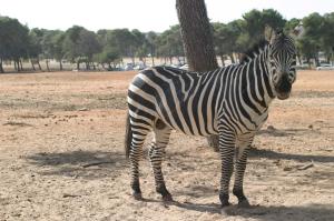 Oooo Nice Stripes!